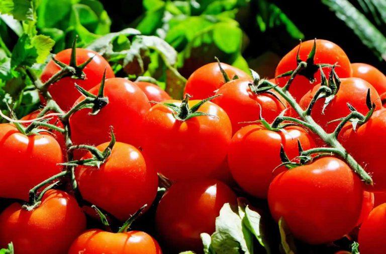 Dr Katarzyna Stoś, prof. nadzw. IŻŻ o roli pomidorów i ich przetworów w diecie
