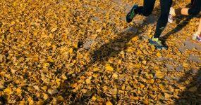 2.bieganie-mivo-erodzina