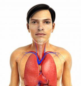 budowa-ukladu-oddechowego