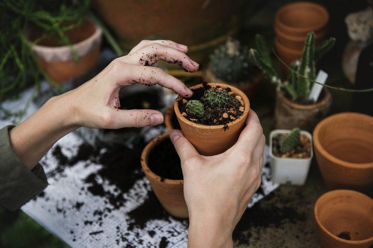 Co powinna mieć w ofercie szkółka roślin ozdobnych?