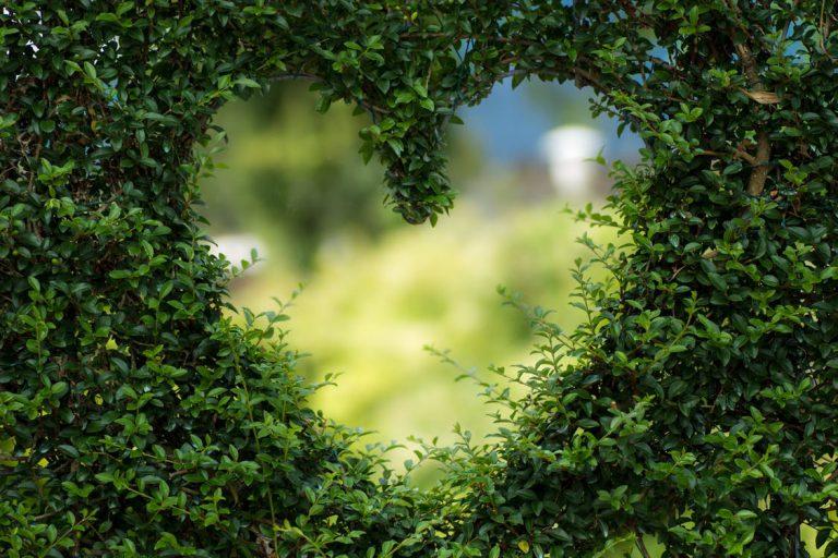 Ogrody wertykalne, czyli: zielone ściany
